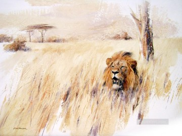 lion in grass 2 Oil Paintings