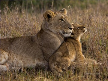 Lion Baby with Mother Oil Paintings