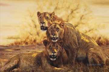 lion 9 Oil Paintings