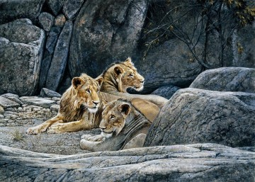 lions at rock Oil Paintings