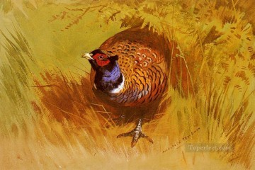 A Cock Pheasant Archibald Thorburn bird Oil Paintings