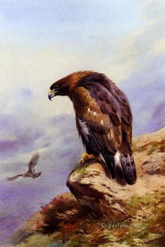 A Golden Eagle Archibald Thorburn bird Oil Paintings