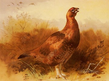 Cock Grouse Archibald Thorburn bird Oil Paintings