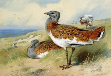 Great Bustards Archibald Thorburn bird Oil Paintings