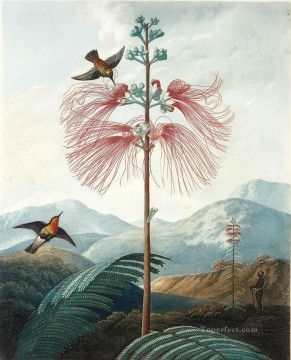 LARGE FLOWERING SENSITIVE PLANT Philip Reinagle birds Oil Paintings