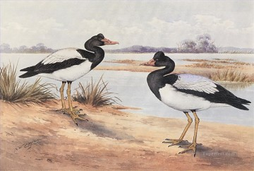 Bird Painting - Magpie Goose birds