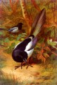 Magpies Archibald Thorburn bird