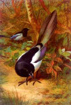 Magpies Archibald Thorburn bird Oil Paintings