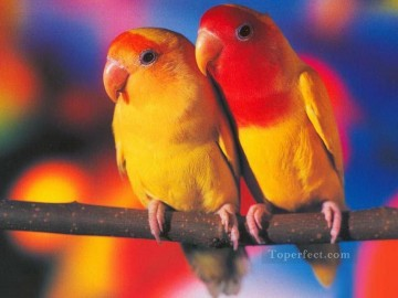 Papel de Parede Periquitos birds Oil Paintings
