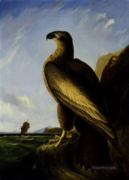 Animal Painting - Washington Sea Eagle birds