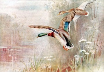 Bird Painting - Wild Ducks birds