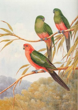 Animal Painting - australian king parrot birds