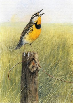 bird in grassland Oil Paintings
