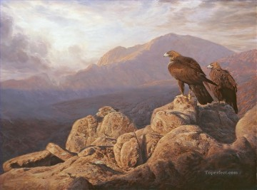 Bird Painting - eagle aguilas reales birds