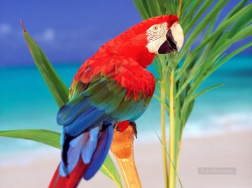 Bird Painting - parrot photograph birds