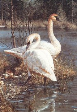 Animal Painting - swans in water birds