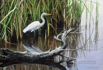 yellow billed egret and little grebe birds Oil Paintings