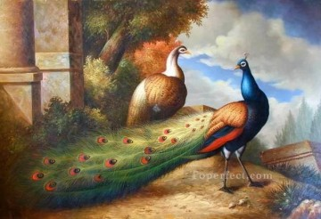 dw065bD animal bird Oil Paintings