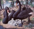 Black Swan Family birds