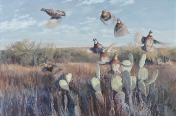 Rod Serbousek birds Oil Paintings