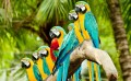 beautiful parrots in a line birds