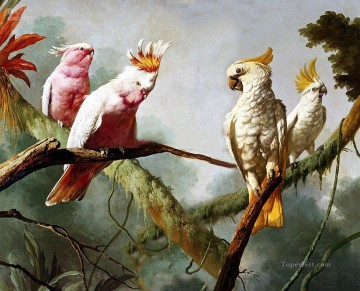 classical parrot on tree birds Oil Paintings