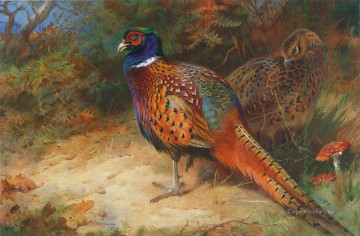 cock and hen pheasant in the undergrowth 1927 birds Oil Paintings