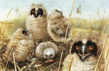 little owls birds Oil Paintings