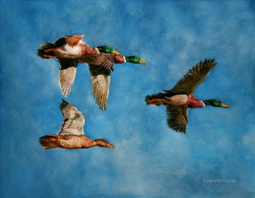 Animal Painting - mallards flying watercolor birds