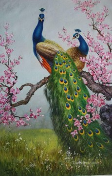 peacocks on plum blossom birds Oil Paintings