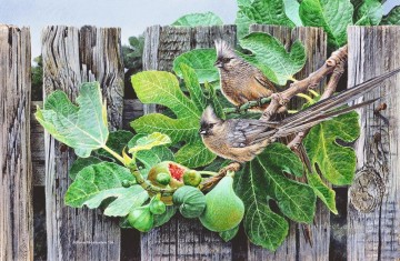 speckled mouse birds Oil Paintings
