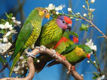 Bird Painting - colorful parrots family birds
