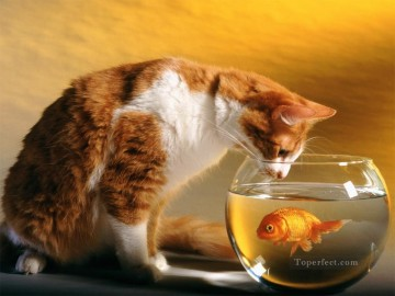 cat and goldfish Oil Paintings