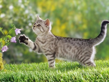 Animal Painting - cat playing flowers