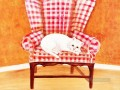 white cat in chair