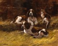 Springer Spaniels and a cat