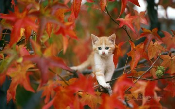 Animal Painting - cat photo in autumn