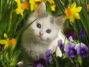 cute cat photo in flowers Oil Paintings
