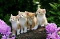 four kittens photo