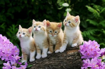 Cat Painting - four kittens photo