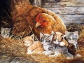 hen and kittens
