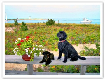 geoff neuhoff dog near beach Oil Paintings