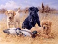 am279D13 animal dogs