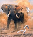 dusty elephant with egrets