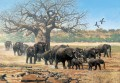 elephant herd with saddle billed storks and baobab