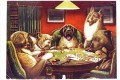 Animal acting human Dogs playing cards facetious humor pets