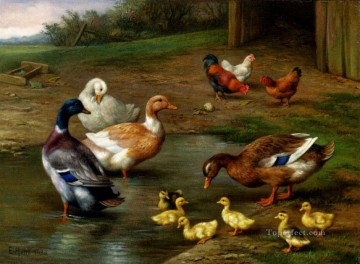 chicken Painting - Chickens Ducks And Ducklings Paddling farm animals Edgar Hunt