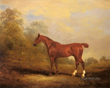 Ferneley Oil Painting - Cecil horse John Ferneley Snr