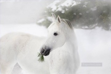 portrait of white horse on the pine trees and snow Oil Paintings