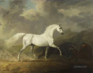 am078D animal horse Oil Paintings